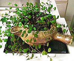 wireplants.jpg